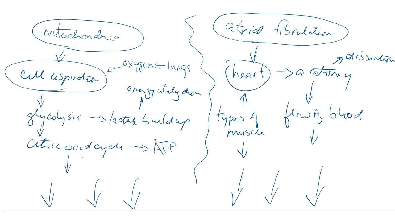 Atrial Fibrillation Concept Map.Mitochondria And Atrial Fibrillation A Project Idea